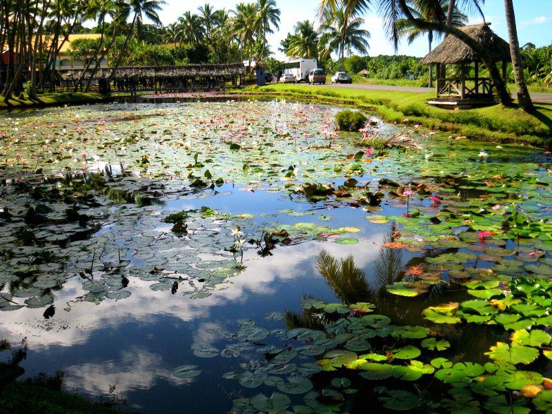 Fiji 2007 (33) kk